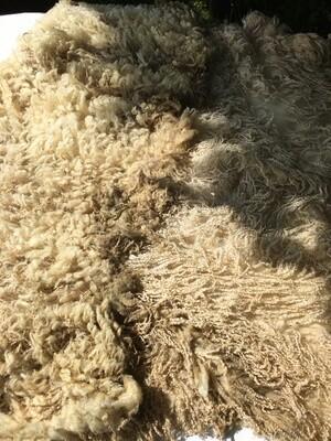Bluefaced leicester ewe fleece