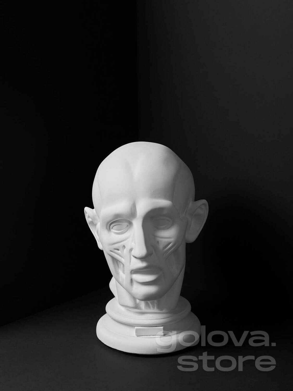Голова Гудона, гипс