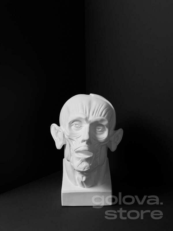 Голова Анатомическая повышенной точности