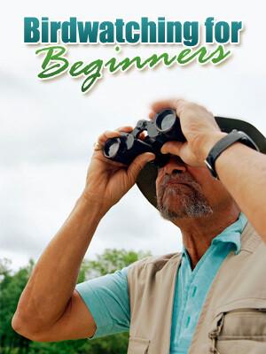 Birdwatching for Beginner