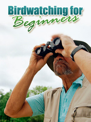Birdwatching for Beginner