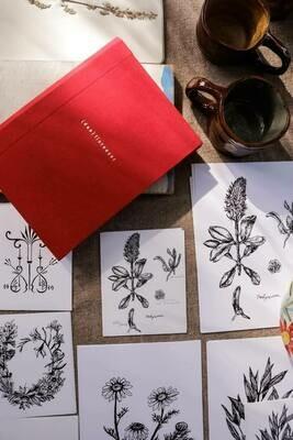 ilustração botânica //