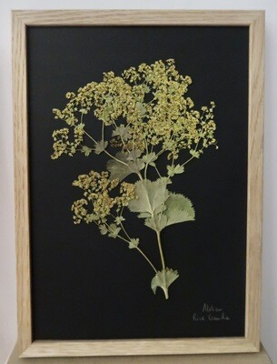 Herbier Un dimanche à la campagne (VENDU)