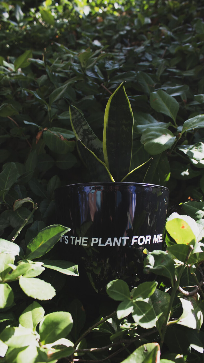"""It's The Plant For Me (Black) — 4.5"""""""