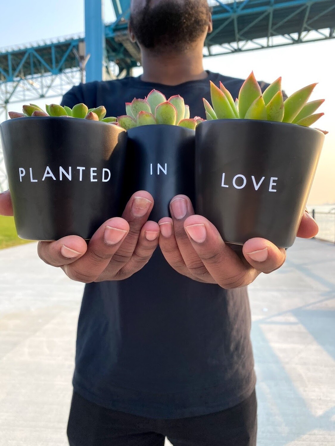 """Planted in Love Plant Set — 3"""""""