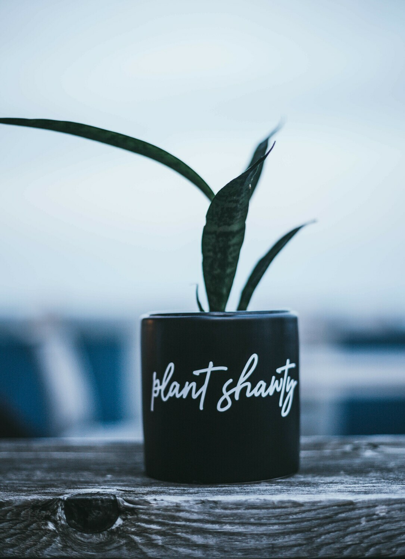 Ceramic Plant Shawty (Various Sizes) — Black