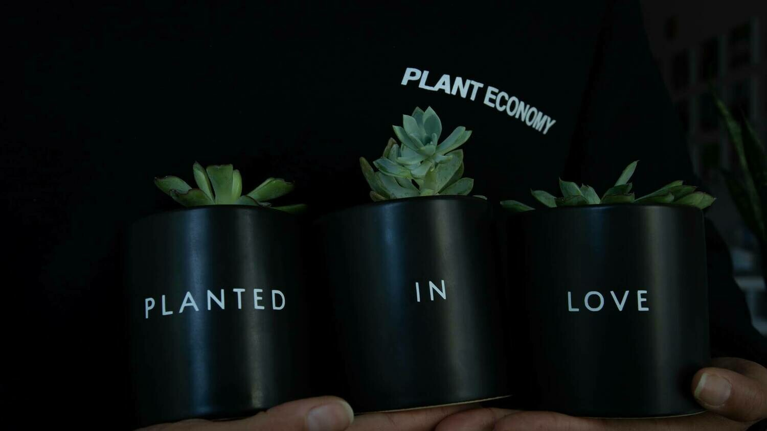 Planted in Love Plant Set — 3.5""