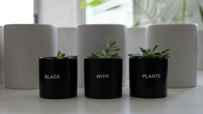 "Black With Plants Plant Set — 3.5"""