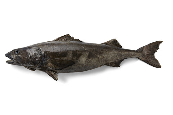 Sablefish (Black Cod) - 10lb Box of 5-8oz Portions