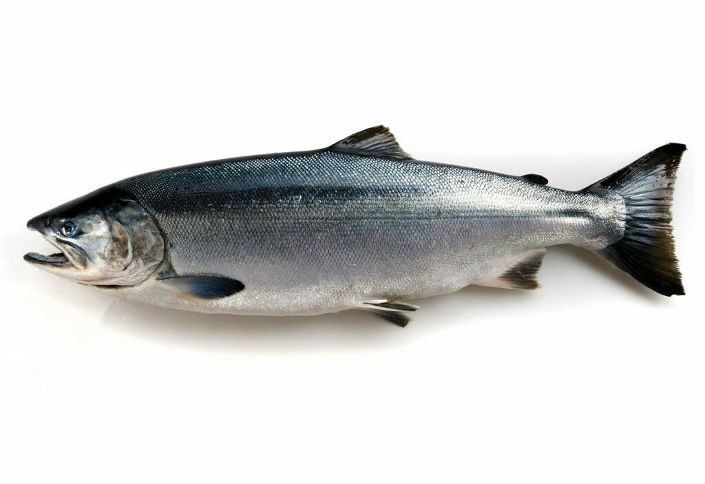 Coho Salmon - 10lb Box Of 5-7oz Portions