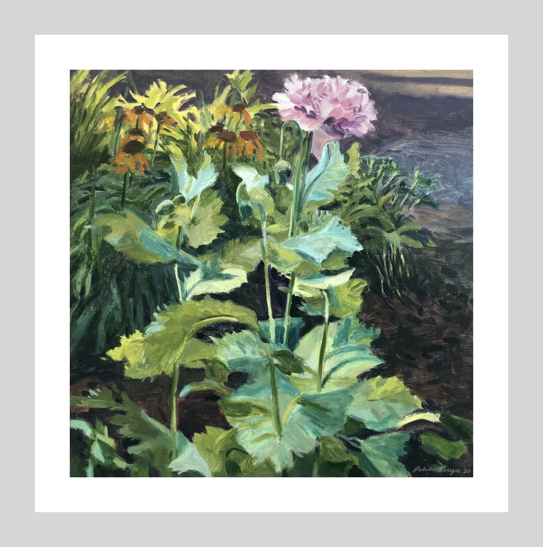 First Poppy   Fine Art Print   16