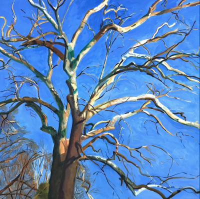 The Sycamore  oil on canvas 48