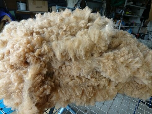 Skirted Fawn Fleece - Bambini