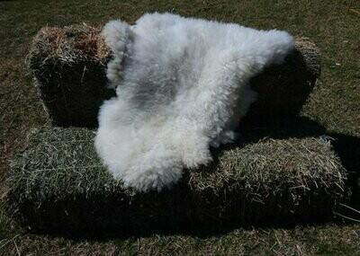 Sheep Skins