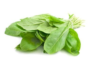 Green sorrel leaves Seeds (Approximately 50 seeds)