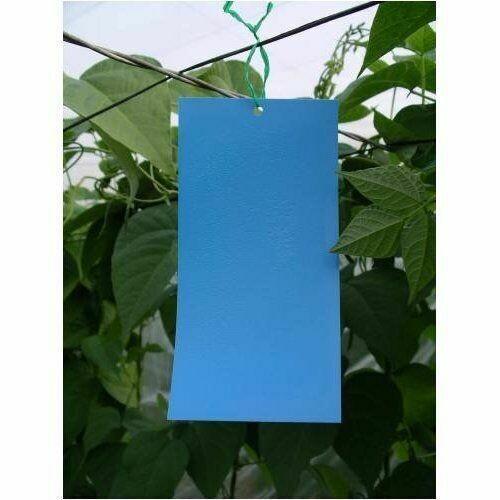 Blue Sticky Trap – Pack of 5 Pcs
