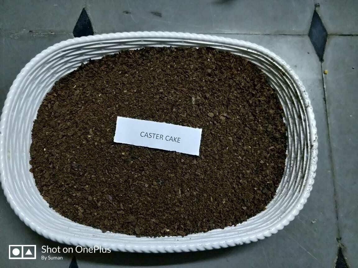 Caster Cake  - 1 Kg