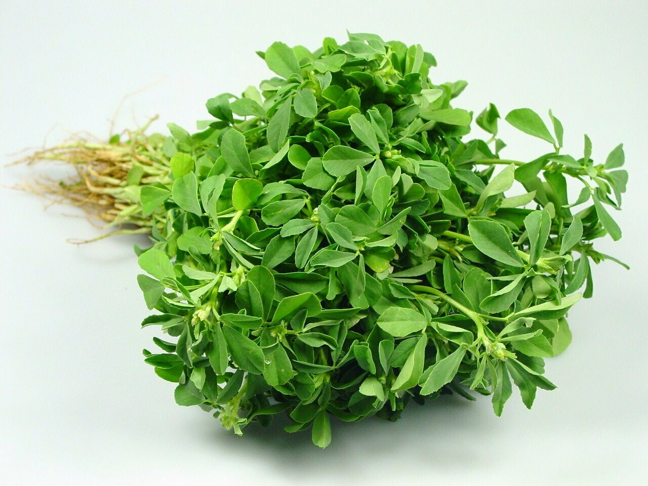 Methi Leaves seeds (Approximately 200 seeds)