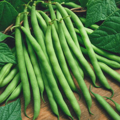 French Beans (Approximately 20 seeds)