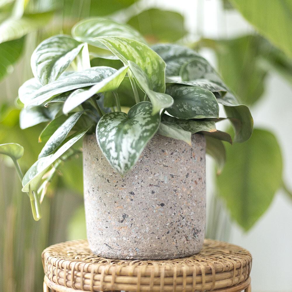The Original Freckled Pot (S)