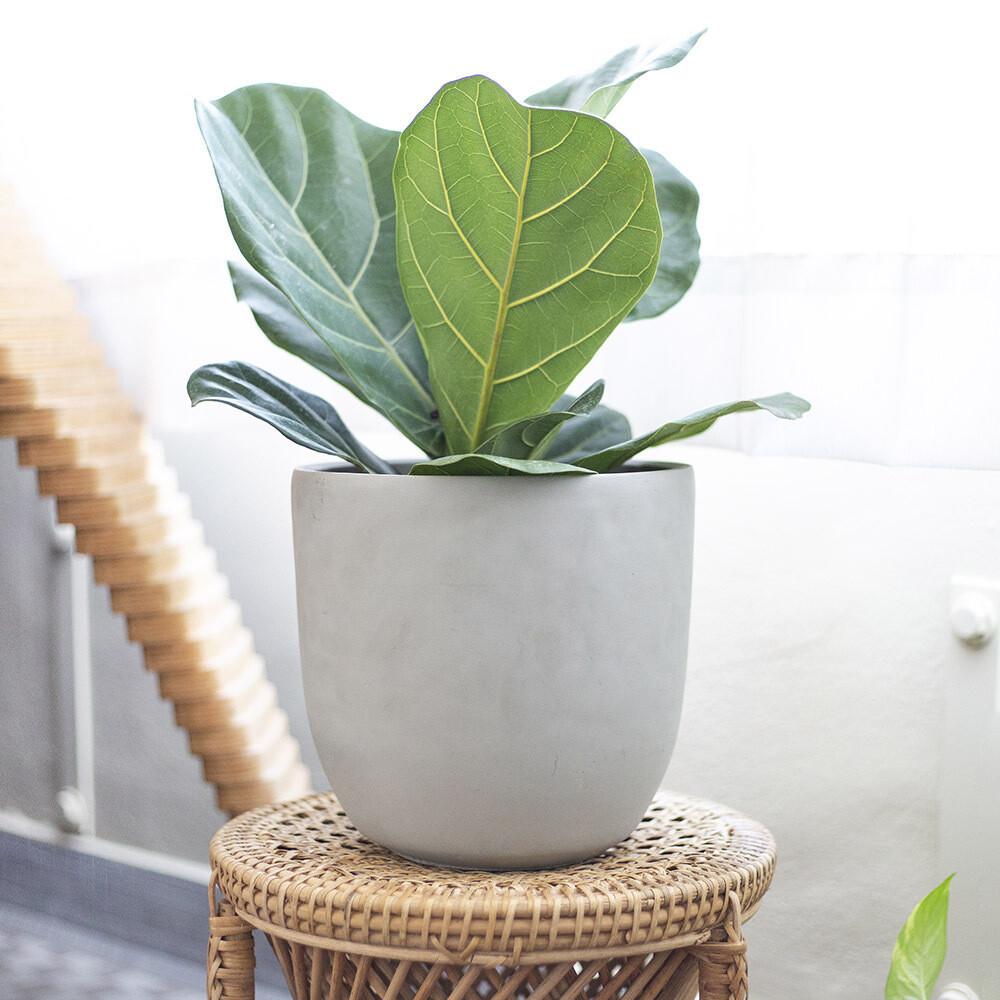 Pear Basic Concrete Pot