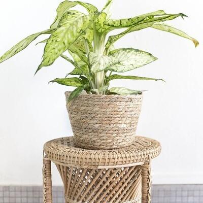 Seagrass Basket Woven Planter (L)