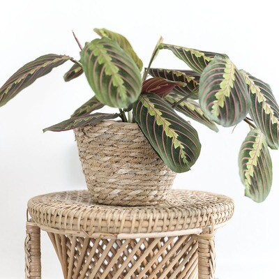 Seagrass Basket Planters