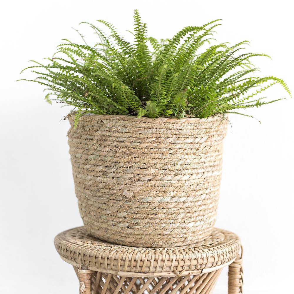 Seagrass Basket Woven Planter (XL)