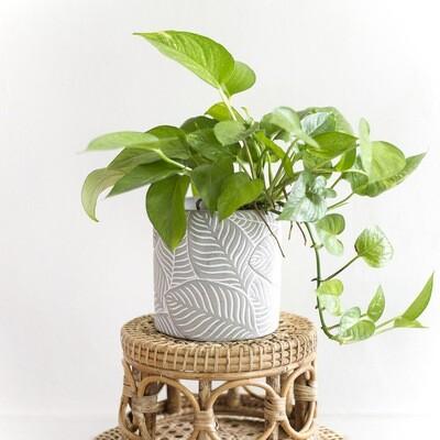 Palm Cement Pot