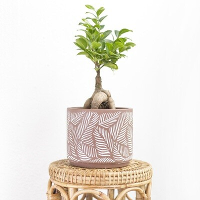 Taupe Tropical Pot