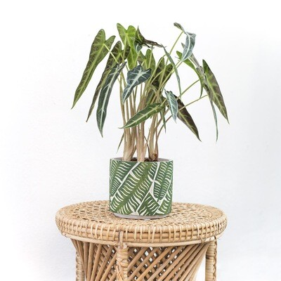 Jungle Tropical Pot