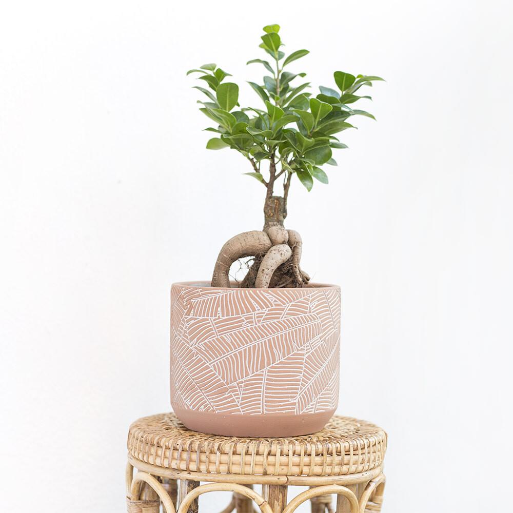 Peach Tropics Pot