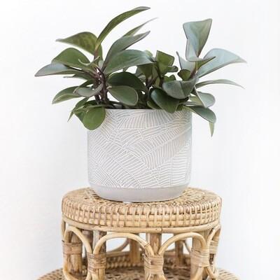 Stone Grey Tropics Pot