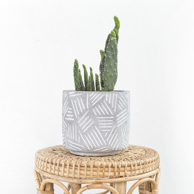 Claw Cement Pot