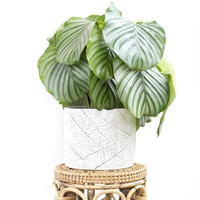 Rustic Leaves Tropical Pot (M)