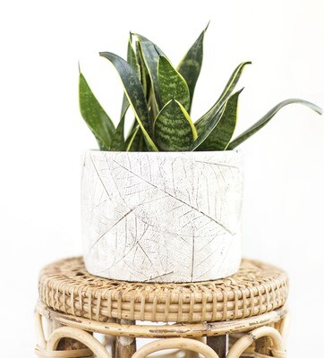 Rustic Leaves Tropical Pot (S)