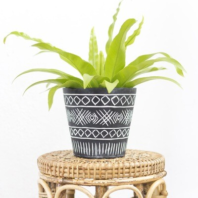 Alexis Monochrome Pot