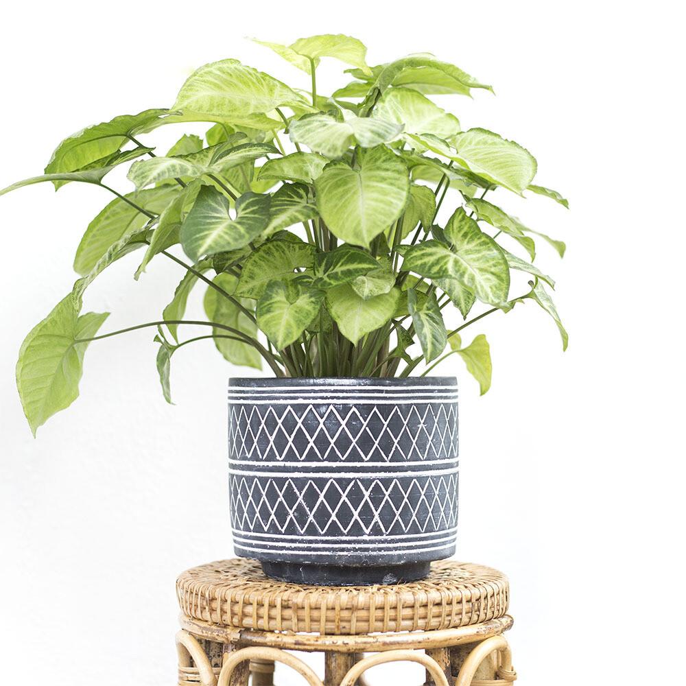 Circa Black Monochrome Pot
