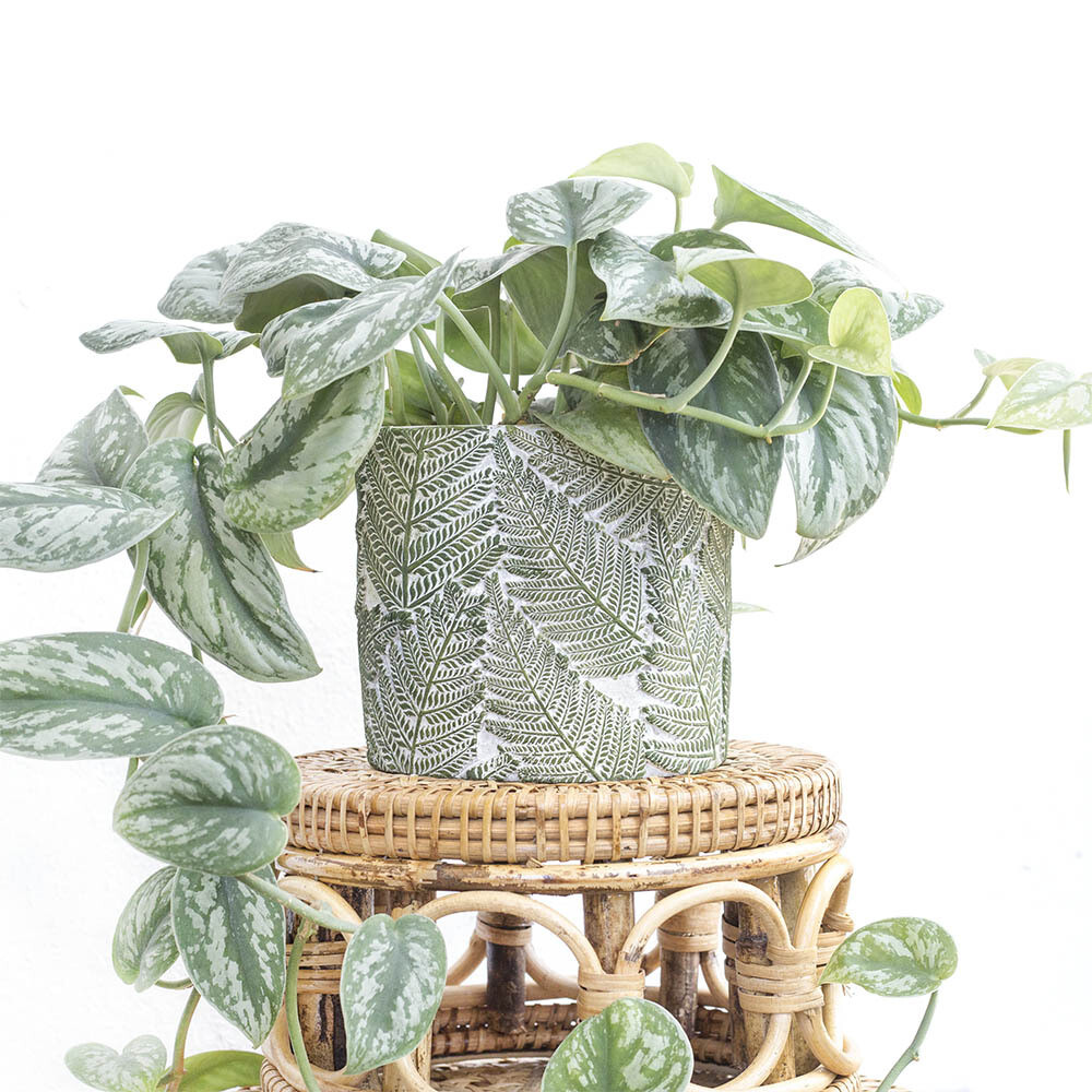 Fern Tropical Pot