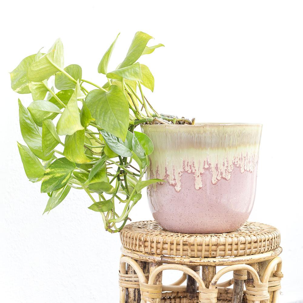 Strawberry Bubblegum Pot (M)
