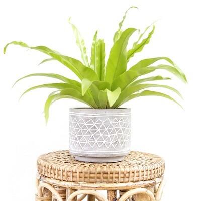 Aztec Cement Pot (S)