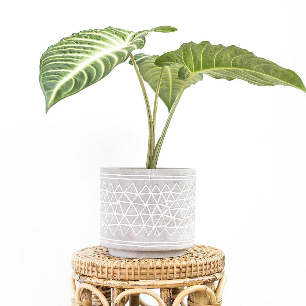 Aztec Cement Pot (M)