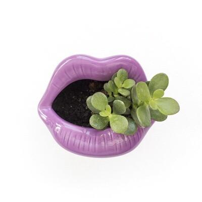 Sweet Lips Planter