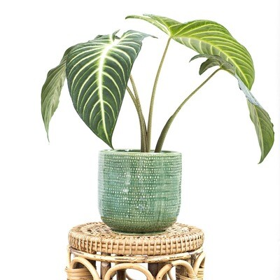 Emerald Green Tropical Pot