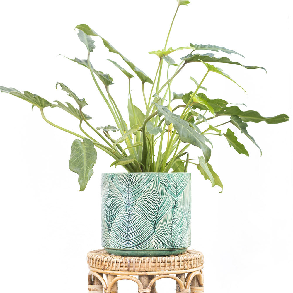 Tropicana Pot (L)