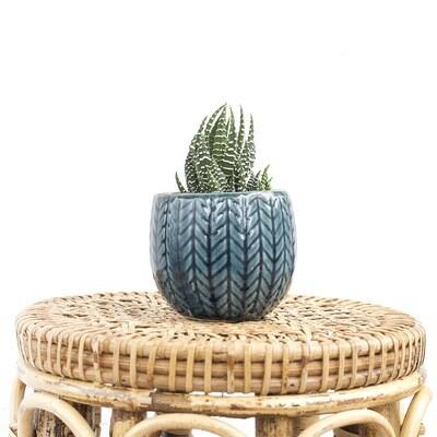 Zara Tropics Pot