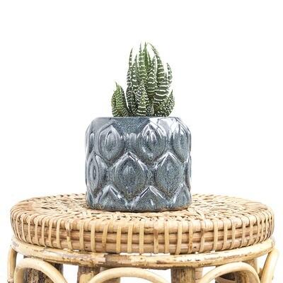 Lena Tropics Pot