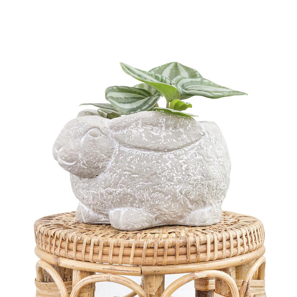 Peter Rabbit Pot