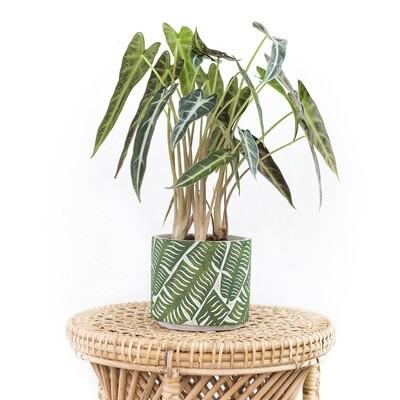 Jungle Tropical Pot
