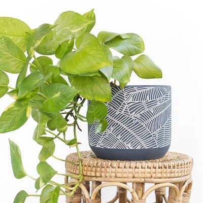 Emerald Blue Tropics Pot